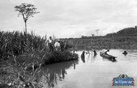cosecha-arroz-kosnipata-1913